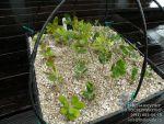 вермикулит для растений. Способы применения